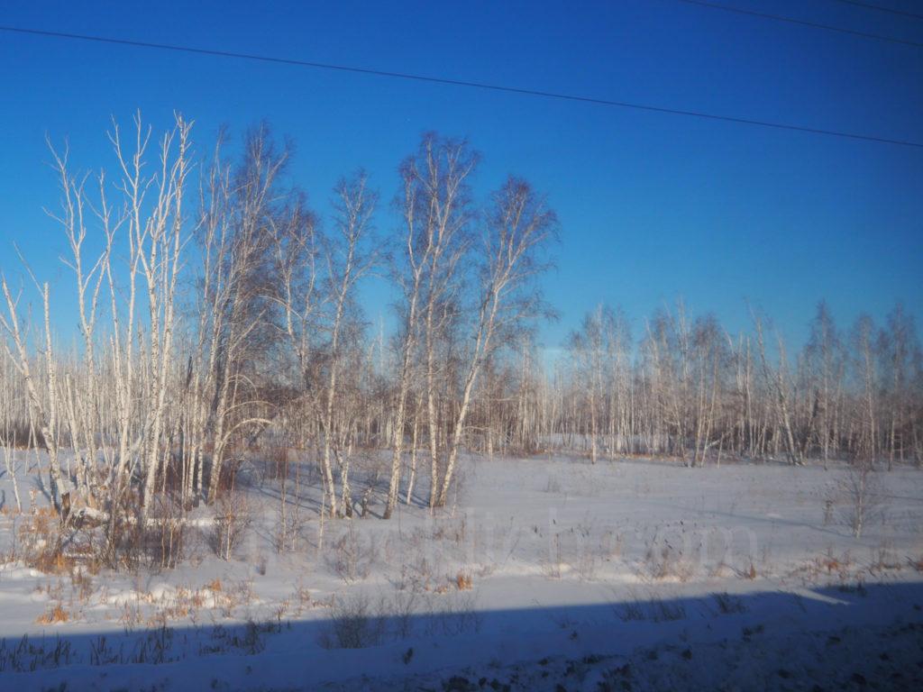 Transsibirische Eisenbahn Transsib Omsk Birken Schnee