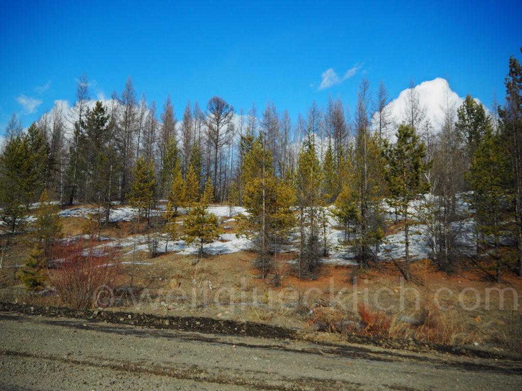 Wald Landschaft Burjatien Sibirien