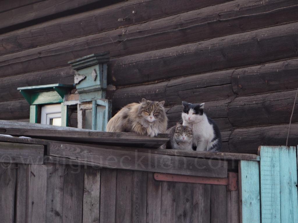 Tschita Sibirien Holzhaus Katzen