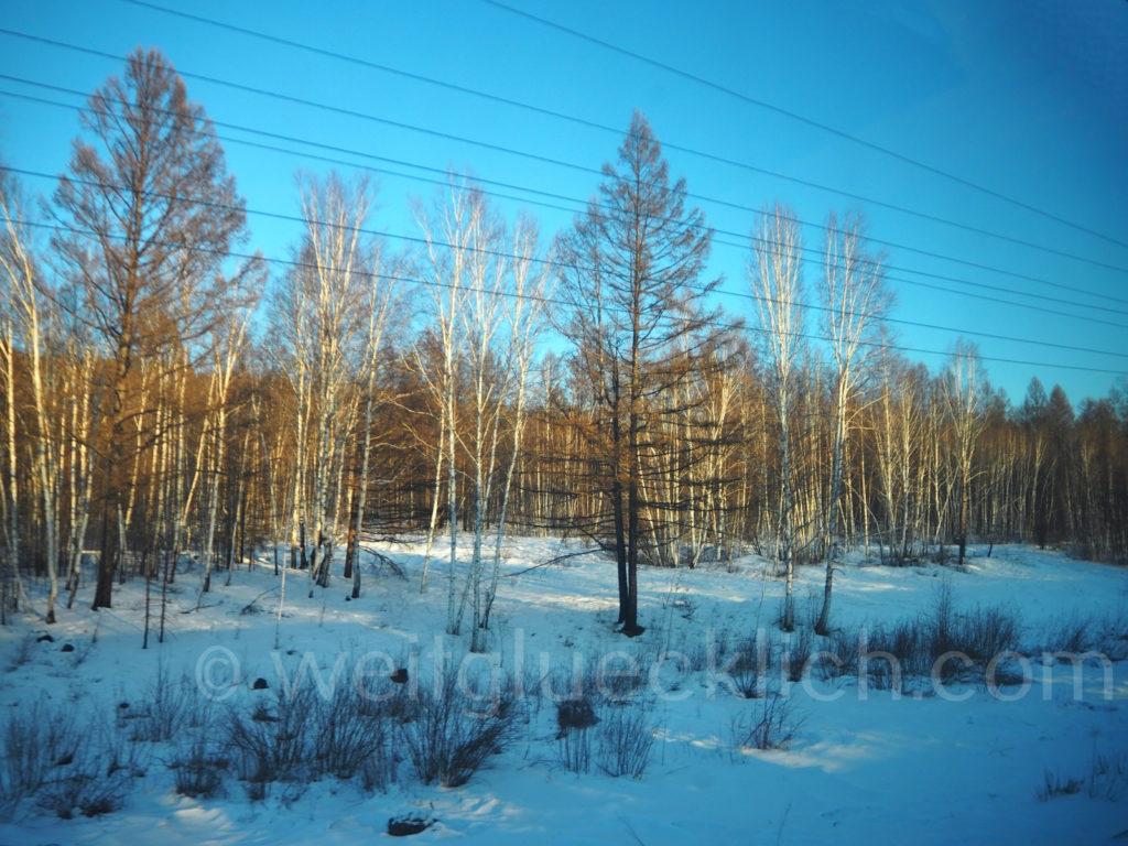 Weltreise 2020 Transsib Transsibirische Eisenbahn Sibirien Winter Birken Abendsonne