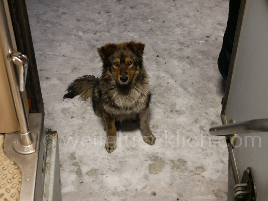 Weltreise 2020 Transsib Transsibirische Eisenbahn Sibirien Jerofei Pawlowitsch Hund
