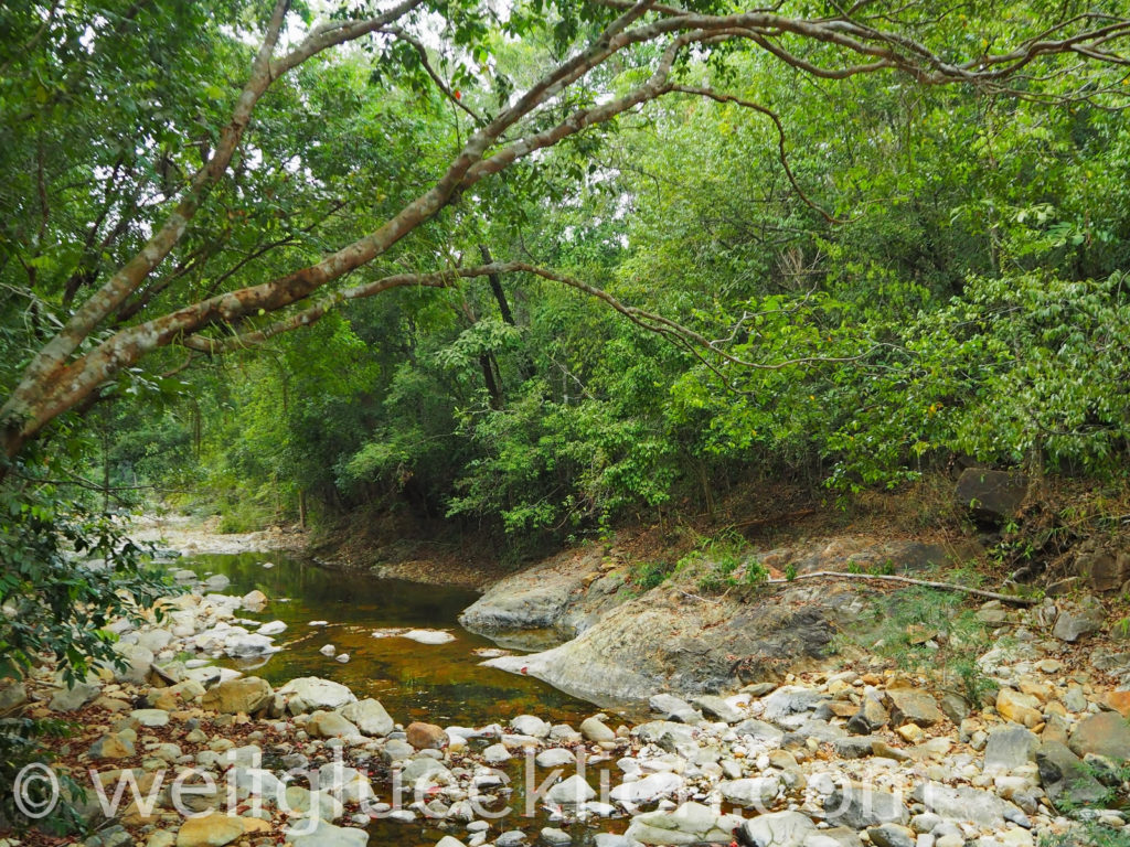 Thailand Koh Chang Khlong Phlu Regenwald Khlong Prao Fluss