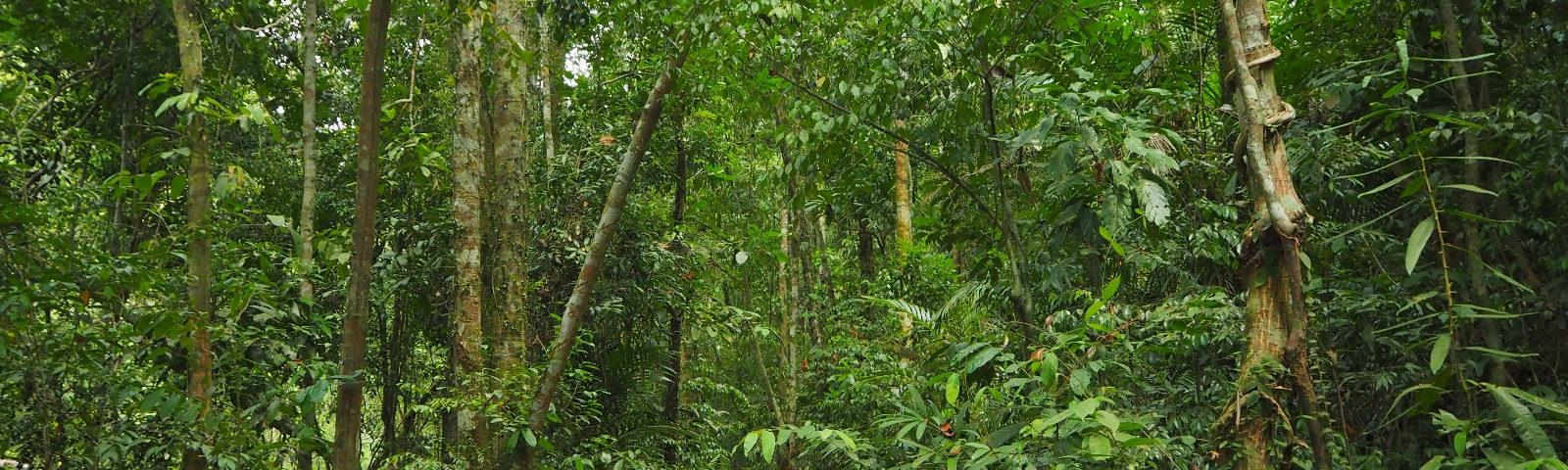 Thailand Koh Chang Khlong Phlu Regenwald