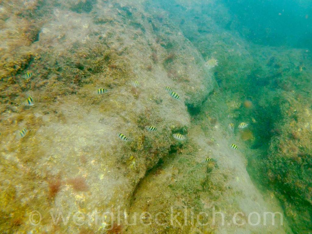 Thailand Koh Chang Cliff Cottage Bucht bay schnorcheln snorkeling tote Fische und Korallen