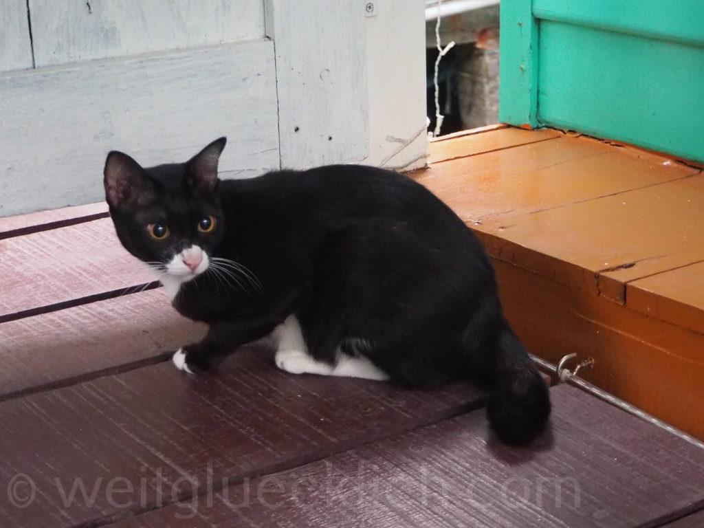 Thailand Koh Chang Bang Bao Paradise Homestay Katze