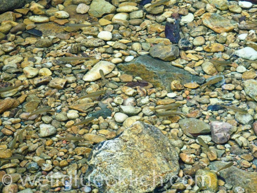 Thailand Koh Chang Khlong Phlu Wasserfall Fische Khlong Prao Fluss