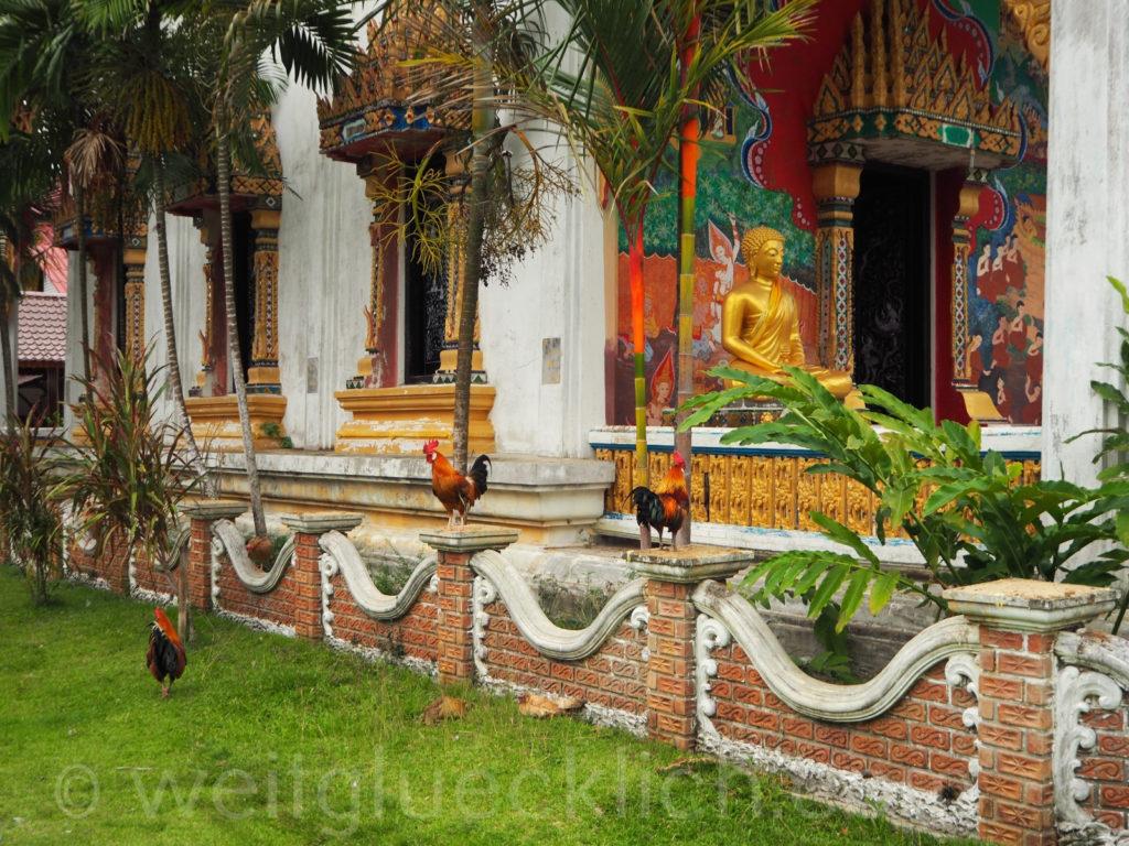 Thailand Koh Chang Wat Khlong Phrao Tempel Haehne Buddha
