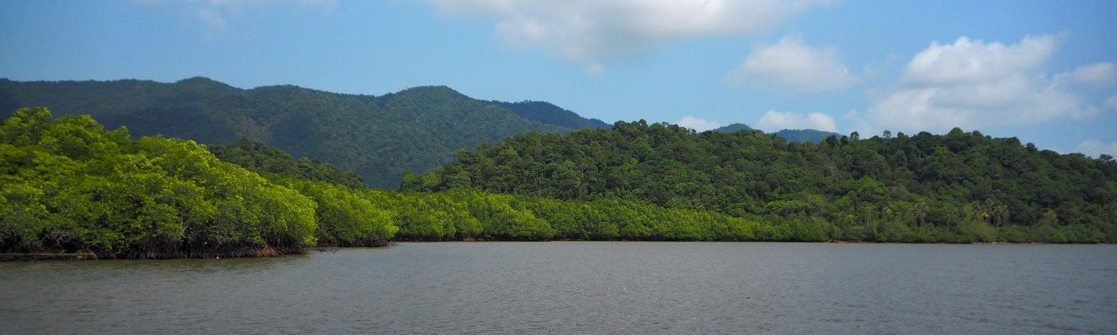 Thailand Koh Chang Salak Phet Mangroven Wald walk way