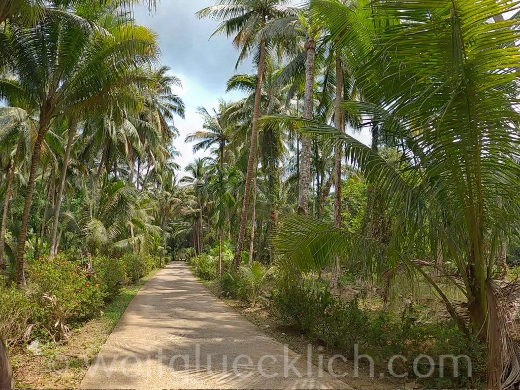 Weltreise Thailand Koh Chang Salak Phet Palmenhain