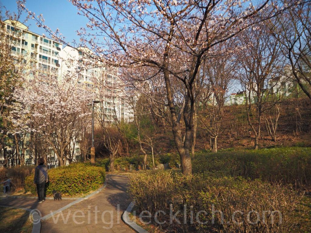 Weltreise 2020 Suedkorea Seoul Hongdae Wau Park Fruehling