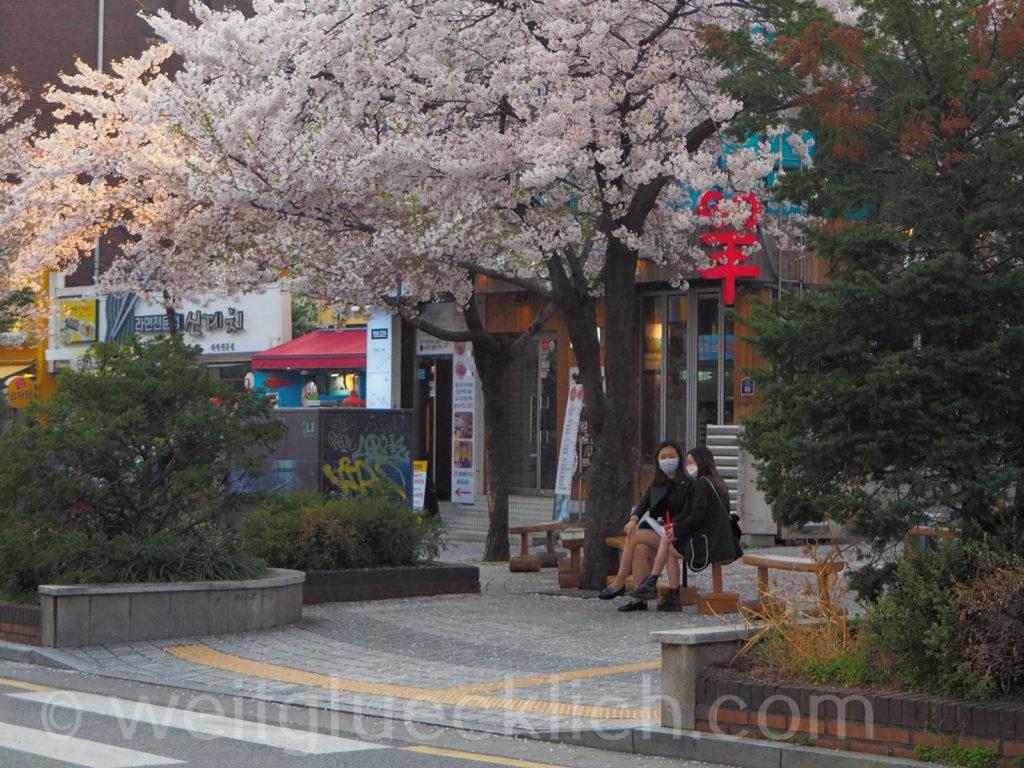 Weltreise 2020 Suedkorea Seoul Ewha Woman's University Kirschbluete