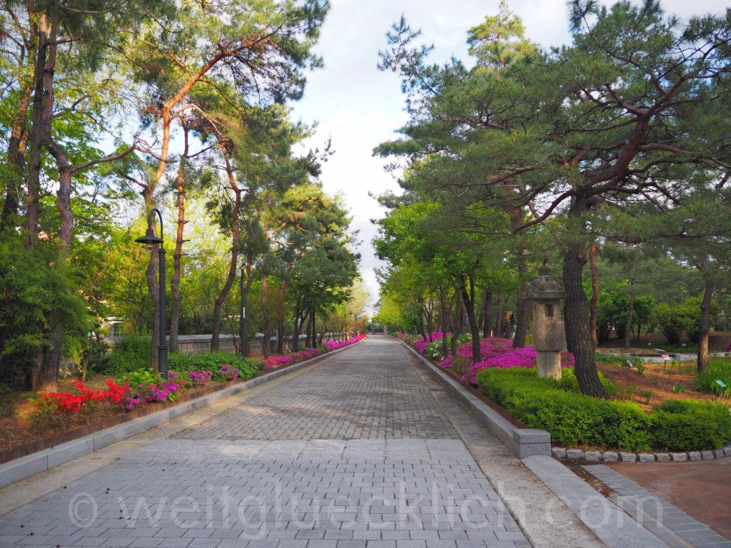 Weltreise 2020 Suedkorea Seoul Mapo-gu Jeoldusan Martyrs' Shrine Garten Blumen