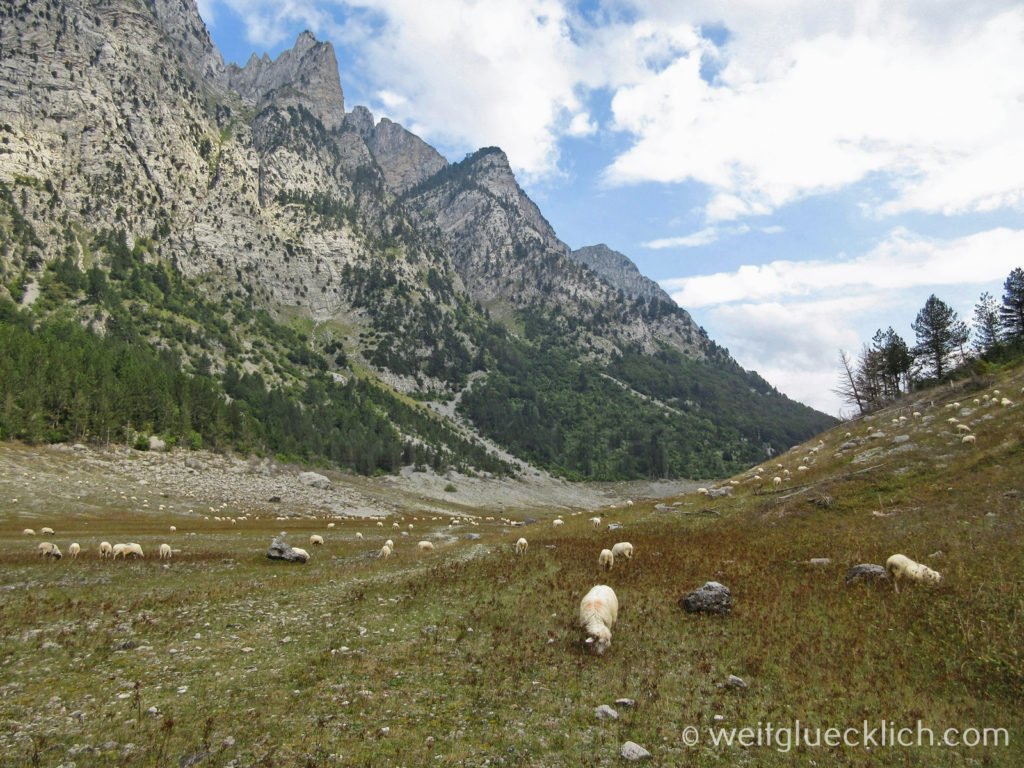 Peaks of the balkans Montenegro Vusanje Schafe