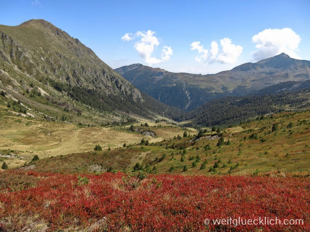Peaks of the Balkans Kosovo Bergwiese Vegetation
