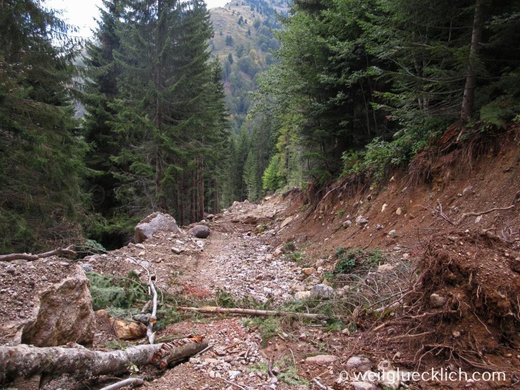 Peaks of the Balkans Montenegro Erdrutsch Waldweg Plav