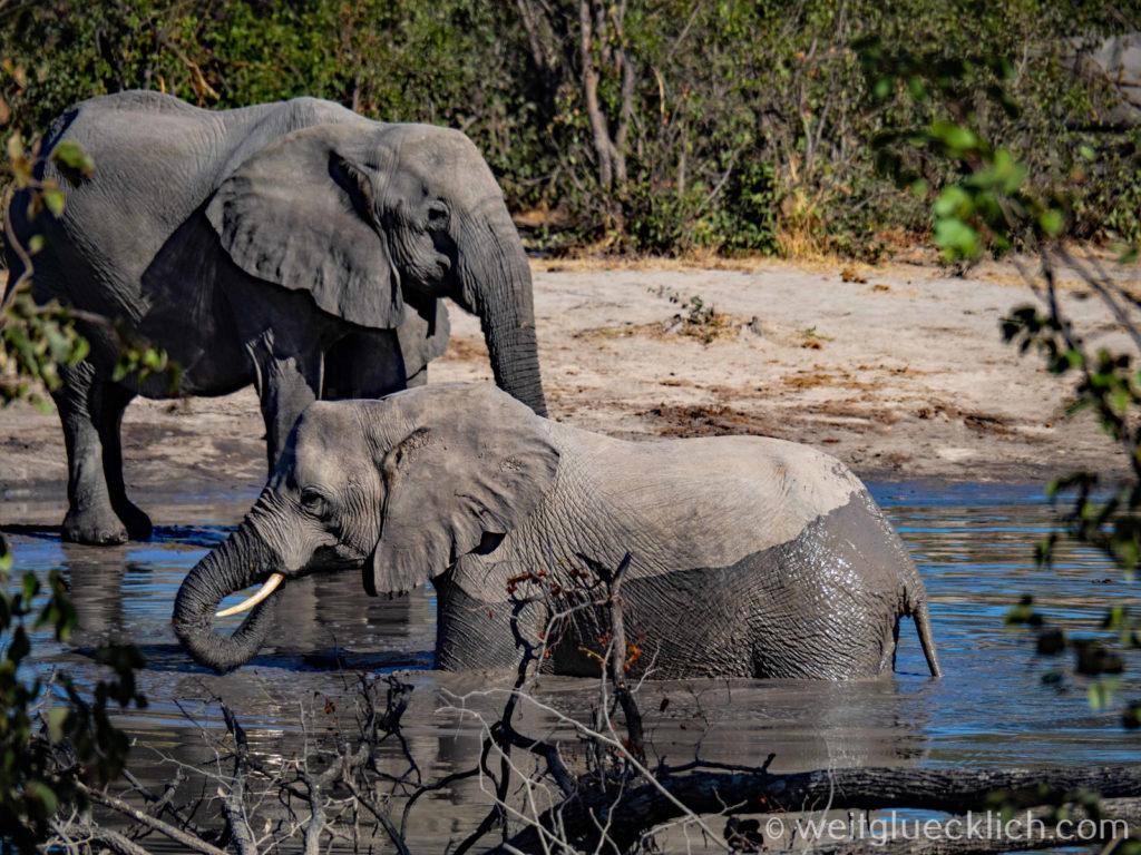 Weltreise 2021 Botswana Moremi Okavangodelta Elefanten baden