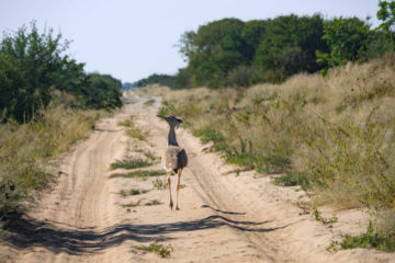 Botswana Central Kalahari Route 2021